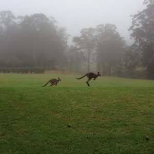 6. Kangaroos by the Window
